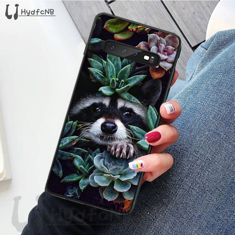 Animal Raccoon Art