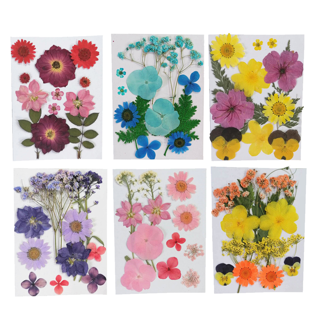 25PCS//Bag Pressed Dried Flowers DIY Natural Preserved Flower Scrapbook Decor