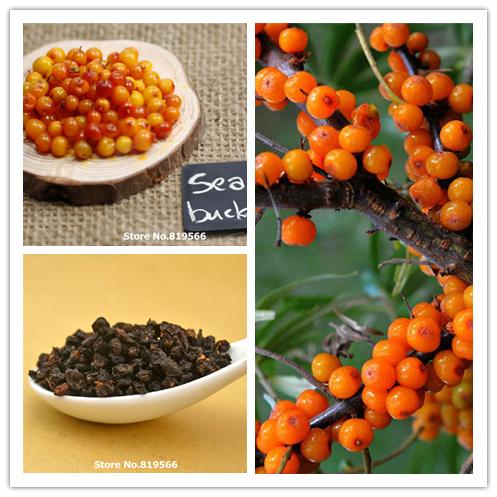 chinese dried Sea Buckthorn 250g Seabuckthorn personal health care Desert herbs Hippophae rhamnoides Vitamins Nutrition Fruits(China (Mainland))