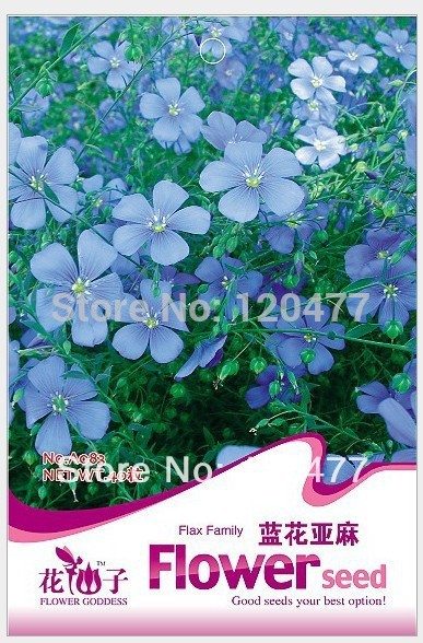 Flowers Blue Flower Linen,Blue Flower Linen seeds, Flowers seeds,about 40 particles(China (Mainland))