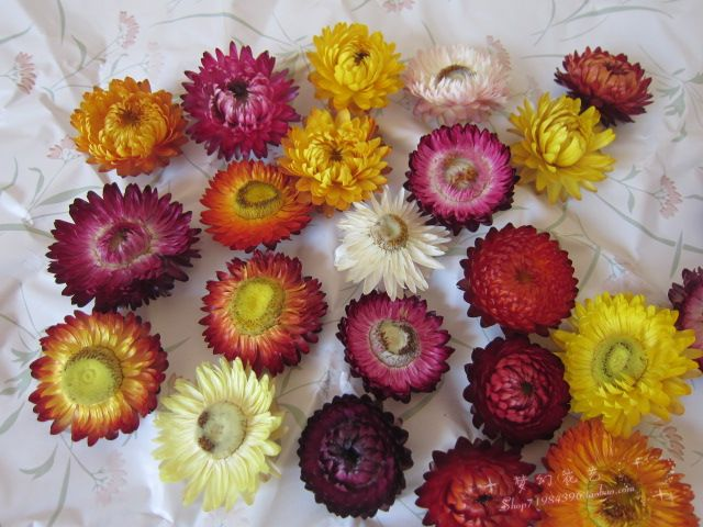 Wholesale 200pcs per lot straw daisy home decoration dried flowers(China (Mainland))