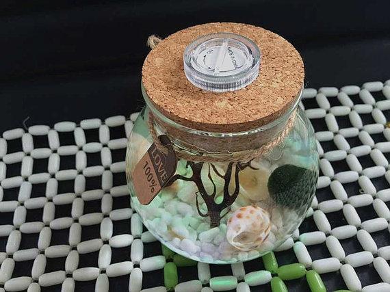 Marimo acuario kit con frasco de vidrio/bola de musgo/piedras blancas/abanico