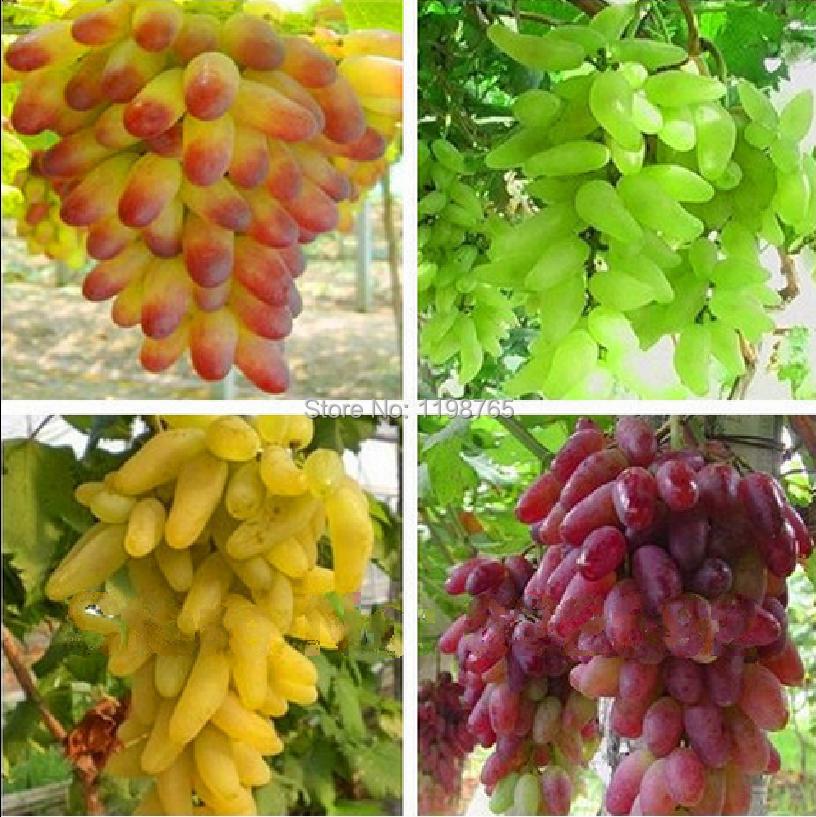 las frutas de oro literatura: