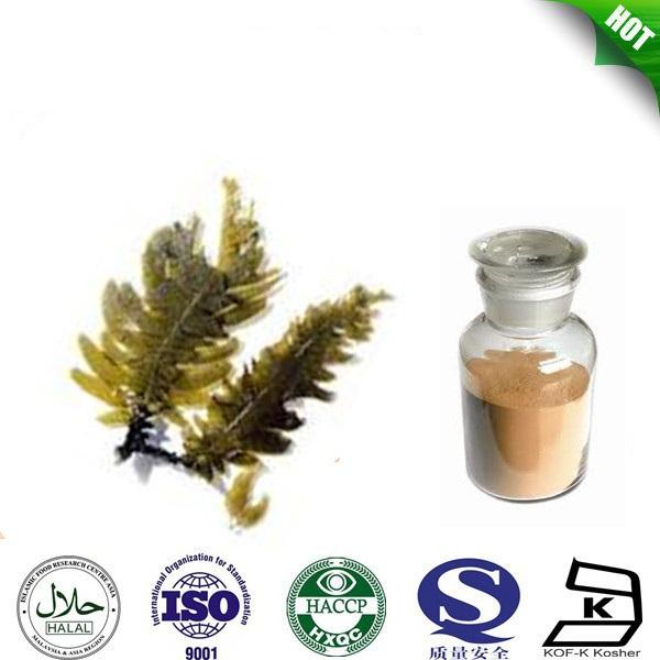 Best quality and natural seaweed powder / fucoxanthin 10% / kelp powder