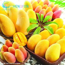 Buy 1pcs/bag Mango Seeds Tree Seeds Organic Heirloom Vegetable Fruit Seeds Sweet Plant Home Garden Perennia Bonsai for $1.02 in AliExpress store