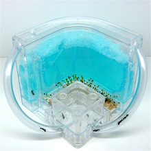 Novelty Ant Home Ant Villa + Ant Farm ecological toys ants home kids Science Toys Children Educational Toy Pet Paradise Gifts(China (Mainland))