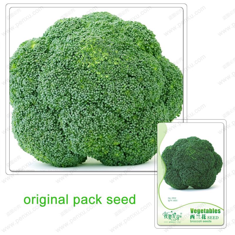 Original Pack 60 Seeds / Pack,Broccoli seeds,Cauliflower,Green flowers ,Balcony vegetables bonsai plant seeds(China (Mainland))