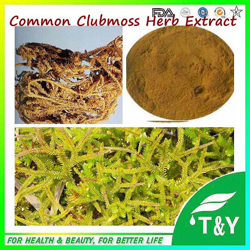 Lycopodium clavatum L./Lycopodium Serratum Extract Powder