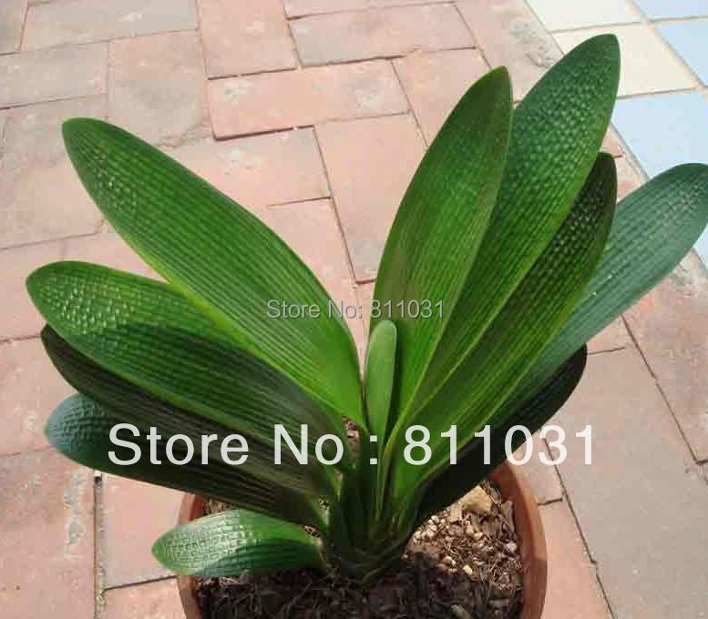 achetez en gros petite plante d 39 int rieur en ligne des grossistes petite plante d 39 int rieur. Black Bedroom Furniture Sets. Home Design Ideas
