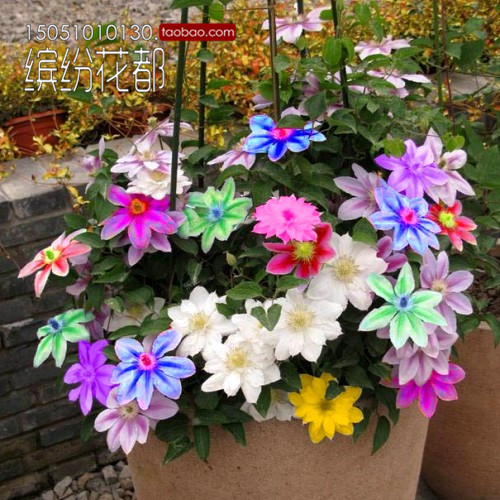 free shipping Bonsai clematis bulbs wire lotus plant seeds  - 200 pcs seeds(China (Mainland))