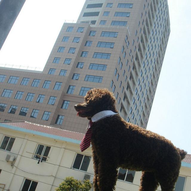 Striped Pet Tie High Quality Polyester + Cotton Gentleman Style Dog Cat Necktie 5 Colors Size S L Boutique Pet Accesories Retail