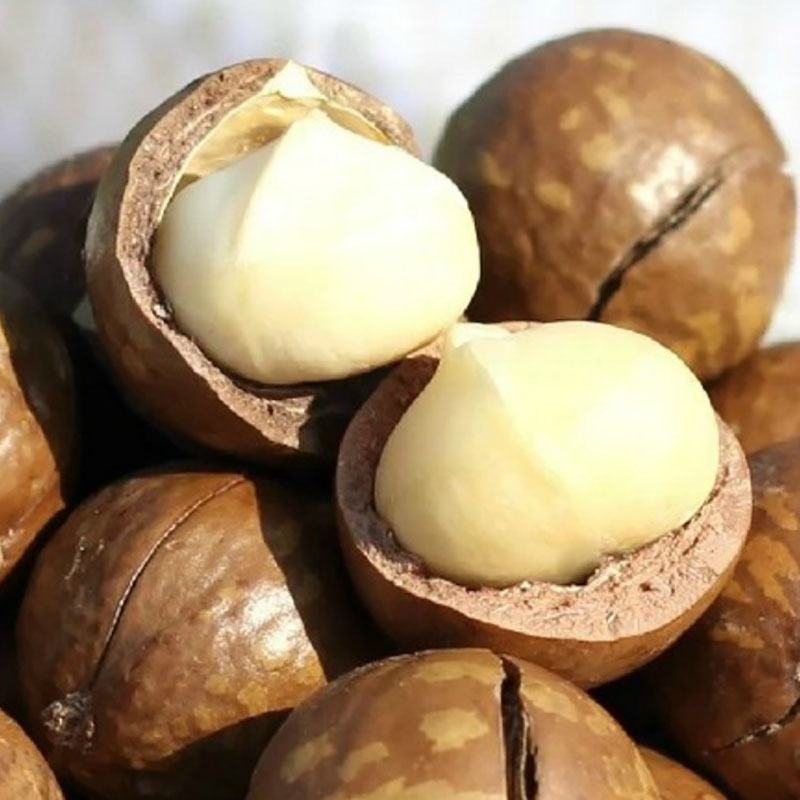 32g Macadamia Nuts Gift Delicious Chinese Snack Nut Creamy Dried Fruit Food for Health Sex Comida