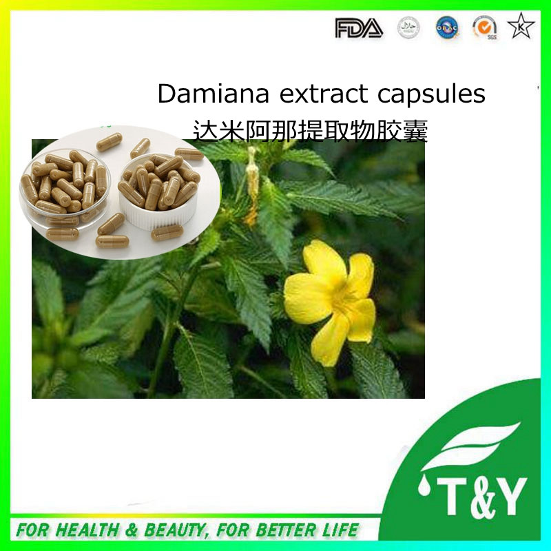 New GMP super powerful Damiana capsule power for man 500mg*200pcs hot sale(China (Mainland))