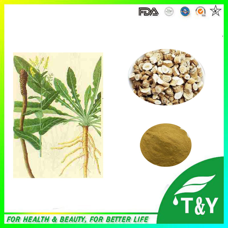 Factory supply direct Isatis Extract/Indigowoad root Extract/Isatis tinctoria root extract 700g/lot