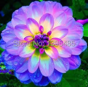 30/bag dahlia,dahlia flower Mixed Colors Dahlias Seeds For DIY Home Garden free shipping(China (Mainland))
