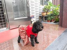2016 hot sales Christmas pet dog clothes warm small medium teddy dog cat dresses Poodle clothes(China (Mainland))
