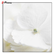Modern Wall Painting White Flower Hydrangea Wall Art Poster Photography Spring Floral Canvas Print Living Room Home Decor(China)
