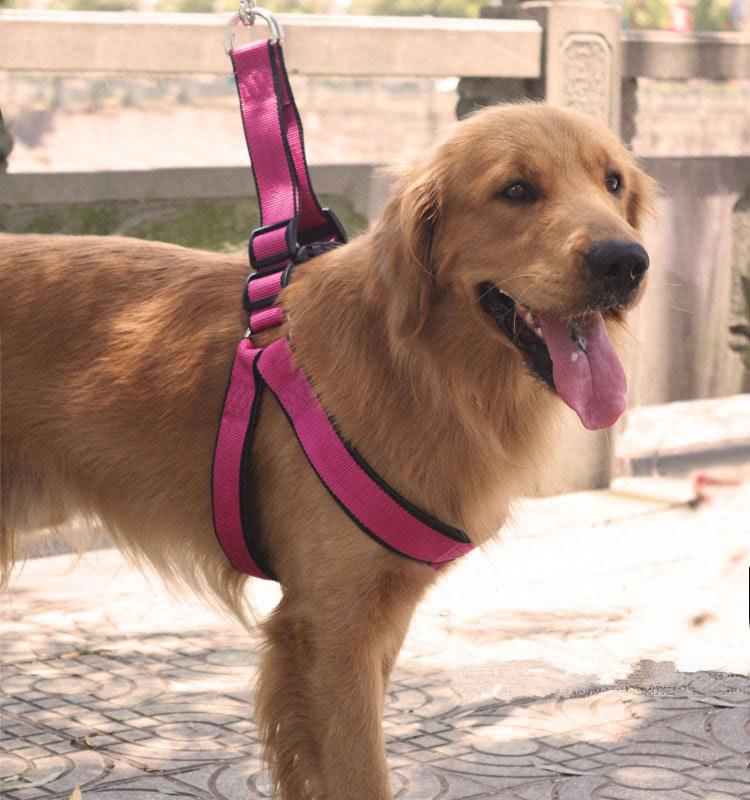 Large Dog Rope Leads