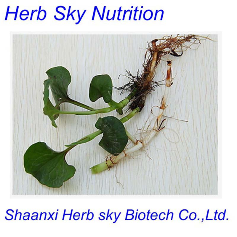 100% Natural 10:1 Herba Houttuyniae extract;Heartleaf houttuynia herb p.e.;Houttuynia cordata extract   500g/lot free shipping