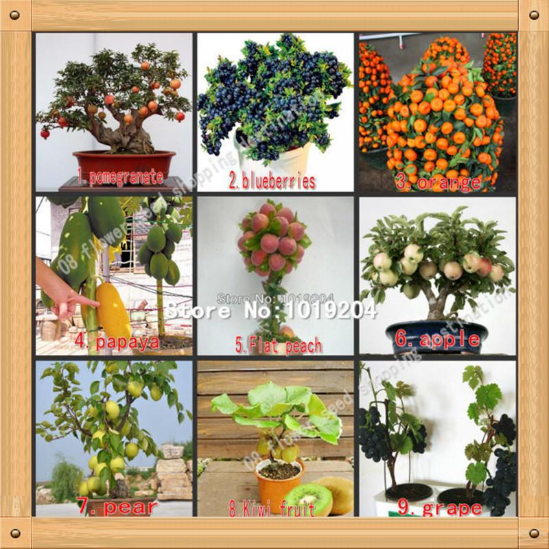 590PC mini bonsai fruit seeds, peach, kiwi, pomegranate, apples, pear, grapes, blueberries, papaya, orange tree seeds-9 package(China (Mainland))