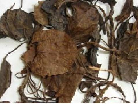 Qin grass broken blood Dan evolvulus according to fill a prescription medicine in Bozhou medicinal materials wholesale<br><br>Aliexpress