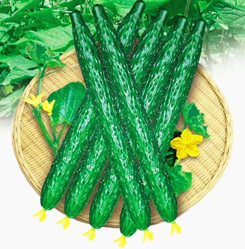 Гаджет  free ship  1 Pack 40 Cucumber Seeds Cucumis Sativus Cuke Seeds, Green vegetable Seeds garden supplies None Дом и Сад