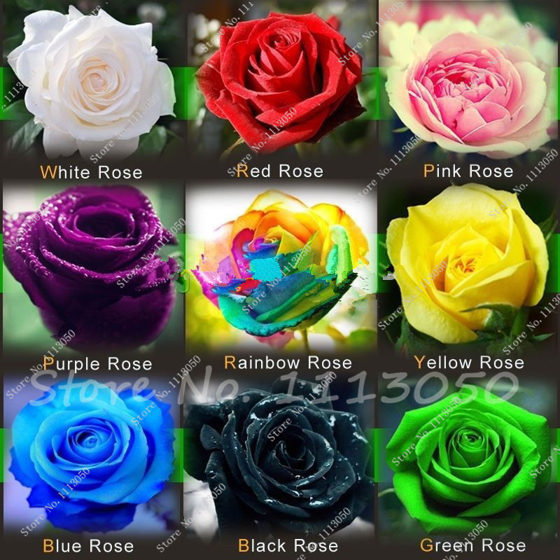 Hot Sale Promotion Very Easy Dishes Seeds Vegetables free Shipping 9 Kinds of Hybrid Seeds of Roses Rainbow Seed 200 Piece(China (Mainland))
