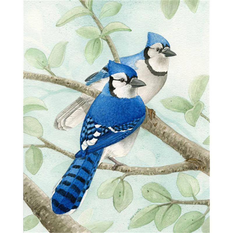 Blue cross animali promozione fai spesa di articoli in for 30x40 planimetrie della casa