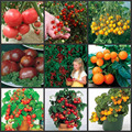 200pcs 20 Kinds Tomato Seeds fruit vegetables seeds Organic