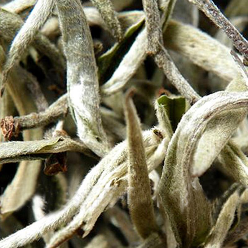 White Tea Sliver Needle Wild Old Tree Fuding Bud 100% Natural Organic Moon Anti Old Health Care Buck Te Bag Free Shipping(China (Mainland))