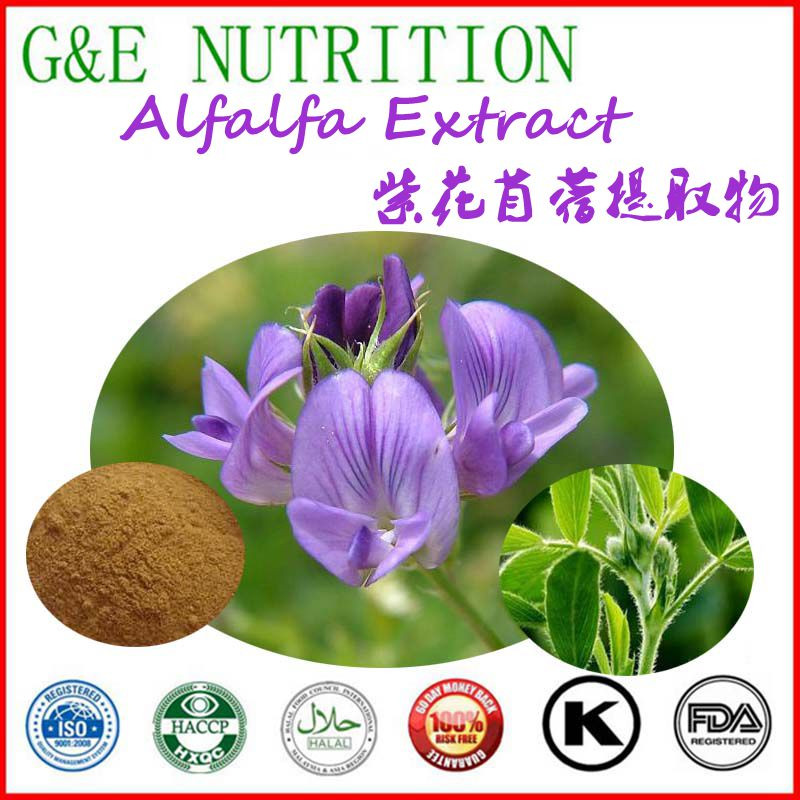100% natural hot sale alfalfa extract/Alfalfa Meal Pellet/Medicago sativa 500g