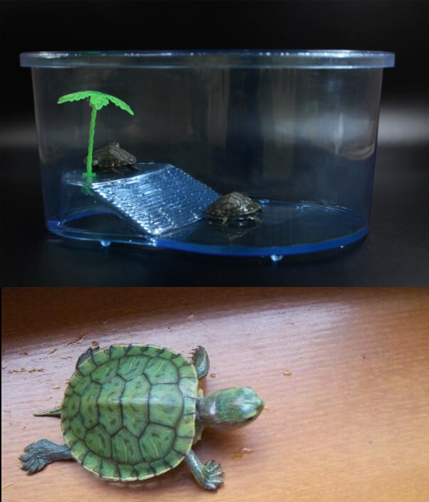 Huge Largest Water Aquarium Turtle Aquarium Accessories Free Shipping ...