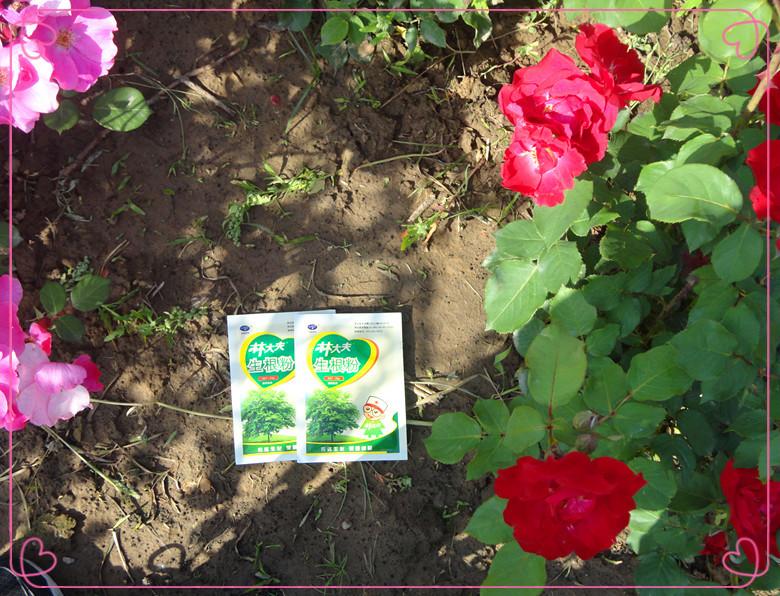 Sod rápida liberação fertilizantes para uso doméstico