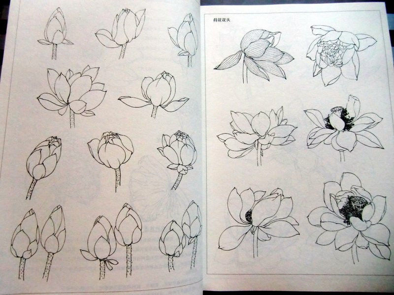 Line Drawing Flower Tattoo : Flower tattoo line drawing