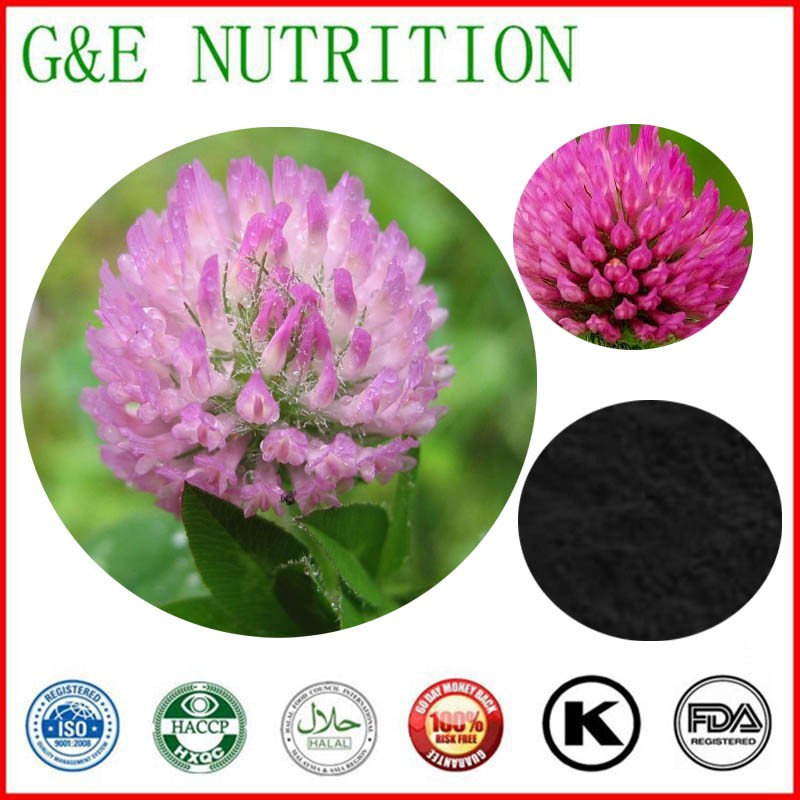 Best quality and professional of Red Clover Extract 10:1, Red Clover Extract 600g