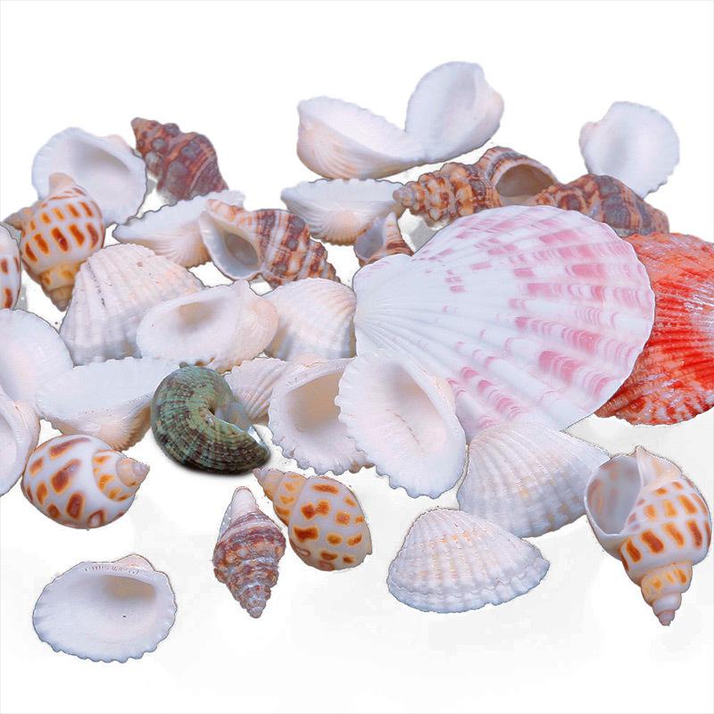 New Approx 100g Beach Mixed SeaShells Mix Sea Shells Shell Craft SeaShells Aquarium #67179(China (Mainland))