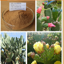 new 1000g Quality cactus extract Triterpenoid saponins specifications 10:1 hypoglycemic to lose weight(China (Mainland))