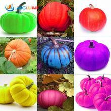 Grade Aaaaa 20 Pcs /bag 9 Kind Of Color Rare Pumpkin Seeds Outdoor Garden Vegetable Seed Easy Plants Sent Gift