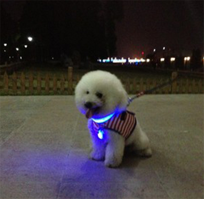 1PCS Pet LED Tag Clip on Glow Flashing Blinking in the Dark Light(China (Mainland))