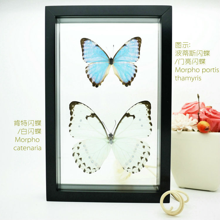 """FOUSEN(043) 11""""(Double glass) Pair framed butterfly natural home decoration(China (Mainland))"""