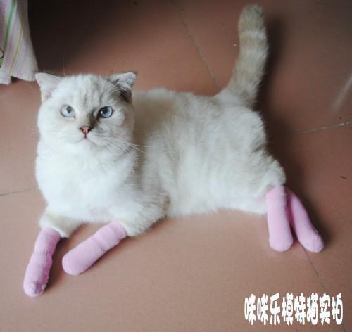 Как вязать носки для котов