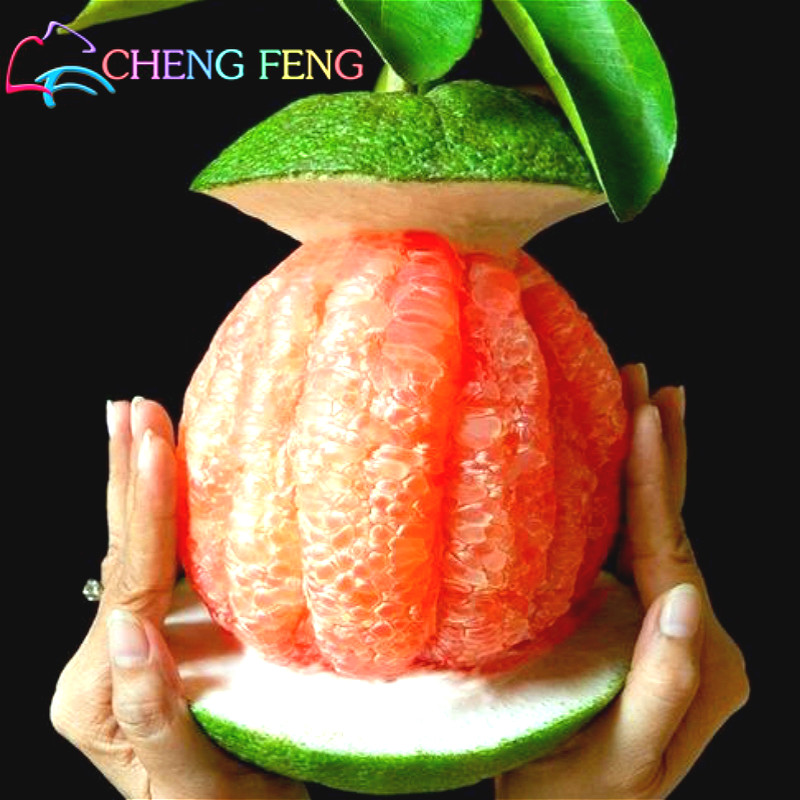 marketing strategy for vietnamese pomelo The best vietnamese restaurant in singapore, serving the best pho, crispy banh mi and a variety of other dishes, with no msg.