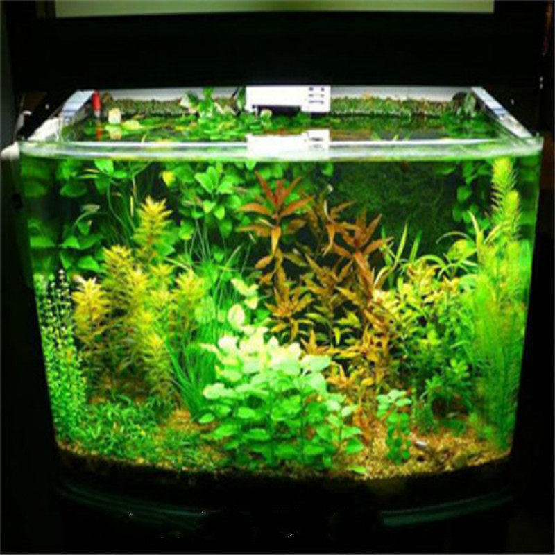 200pcs/bag Aquarium Plants Aquarium Seeds Grass Seeds Water Grasses Decorative Landscaping New Turf Seed Indoor For Home Garden(China (Mainland))