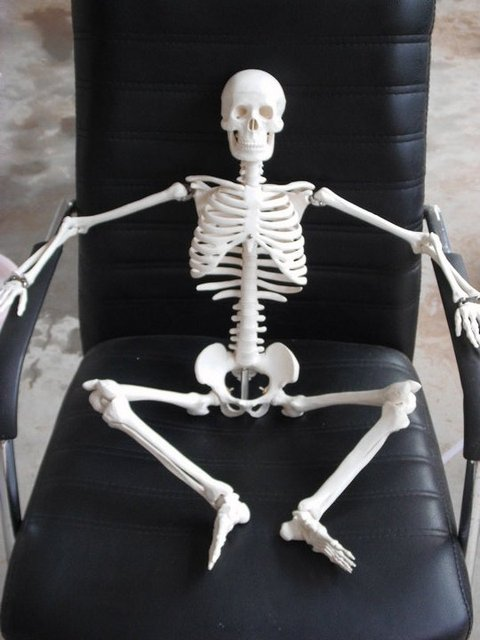 aliexpress : buy 85cm human skeleton anatomical model for sale, Skeleton