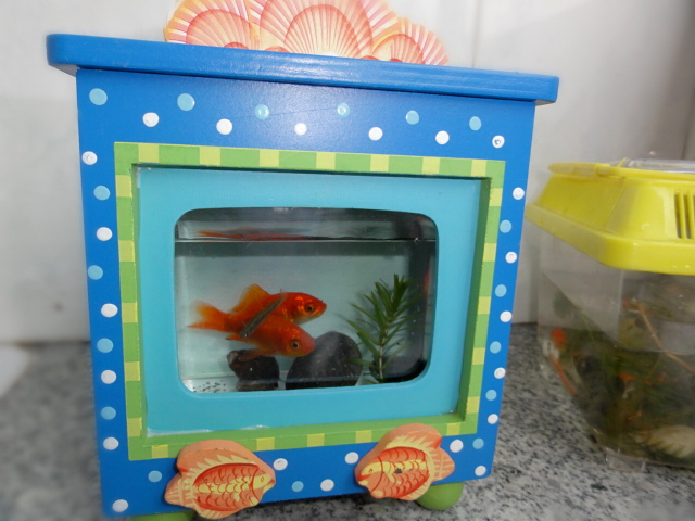 Compare prices on cheap fish bowls online shopping buy for Cheap fish tank
