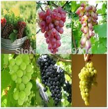 6 varieties grapes (black, purple, yellow, green, red, beauty) 60 grape seeds, plants,tree(China (Mainland))