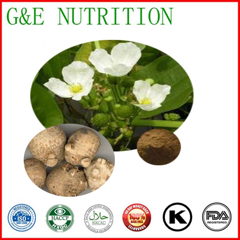 High quality Alisma Extract 10:1  500g<br><br>Aliexpress