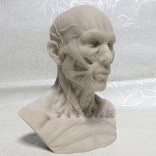 White 1: 3 Human Skeleton Anatomical Model For Odontologia Medical Painting Art Model Skeleton For Sale(China (Mainland))