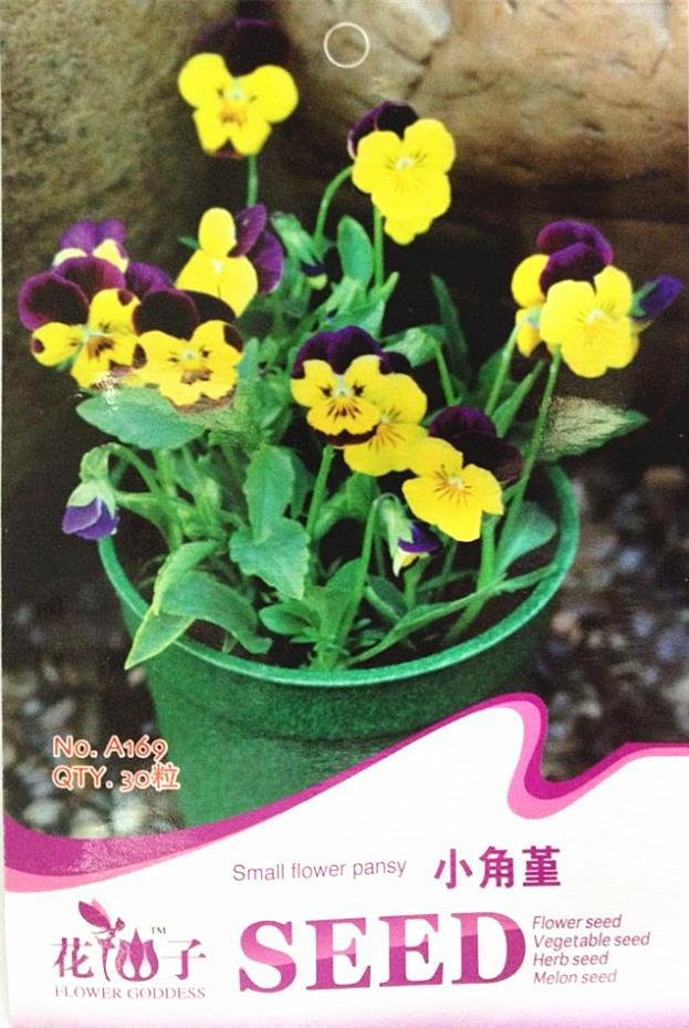 Small Angle pansy flower seeds pansy seeds hardy perennial flowers cat face a face 30 seeds/package(China (Mainland))