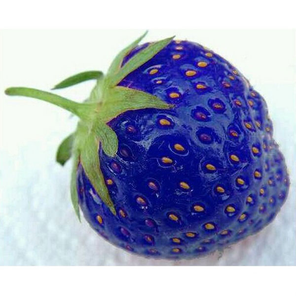 100PCS Natural Sweet Blue Strawberry Seeds Nutritious Delicious Plant Seed free shipping Free Shipping(China (Mainland))